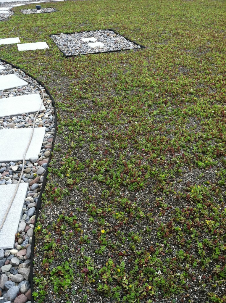 Clinton Green Roof