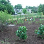 Avery Ave Rain Garden (Photo)