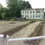 Vacant Lot Project 701 Oswego St. (photo)