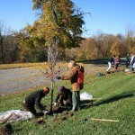 Tree Planting in Schiller Park (photo)