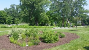 Delaware Rain Garden 20150610_113547