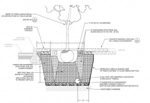 Tree in Planter Bed - Detail Drawing
