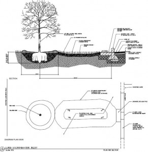 Tree Pit Detail Drawing
