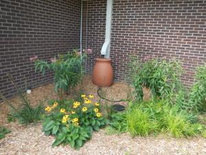 Shove Rain Garden