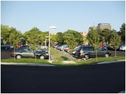 Vegetated Swale in the Townsend Towers Parking Lot