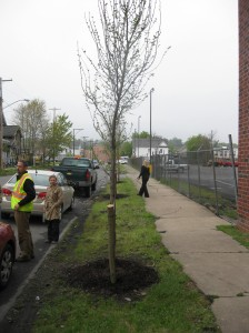 Marcellus Tree Planting