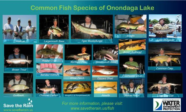 Onondaga Lake Fish Poster 2014