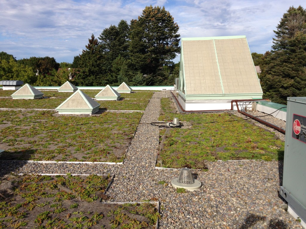 Magnarelli Center Green Roof